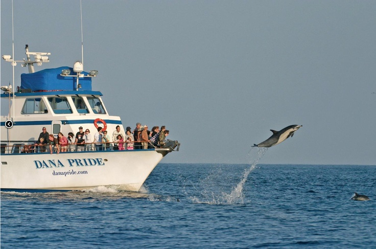 Dana point ca whale watching and fishing 35 minutes for Dana point fishing charters