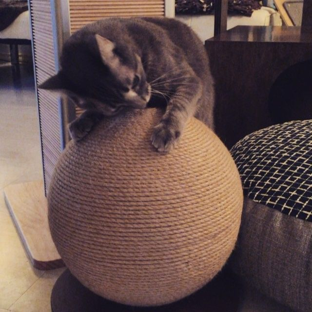 I think Andy likes the new Scratching Sphere! Available from…