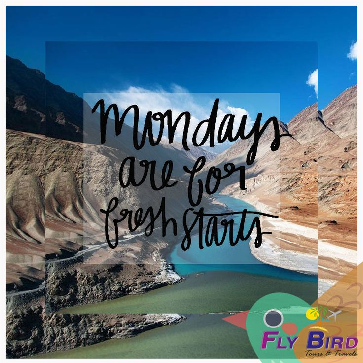 Mondays are for fresh starts. #monday #flybird