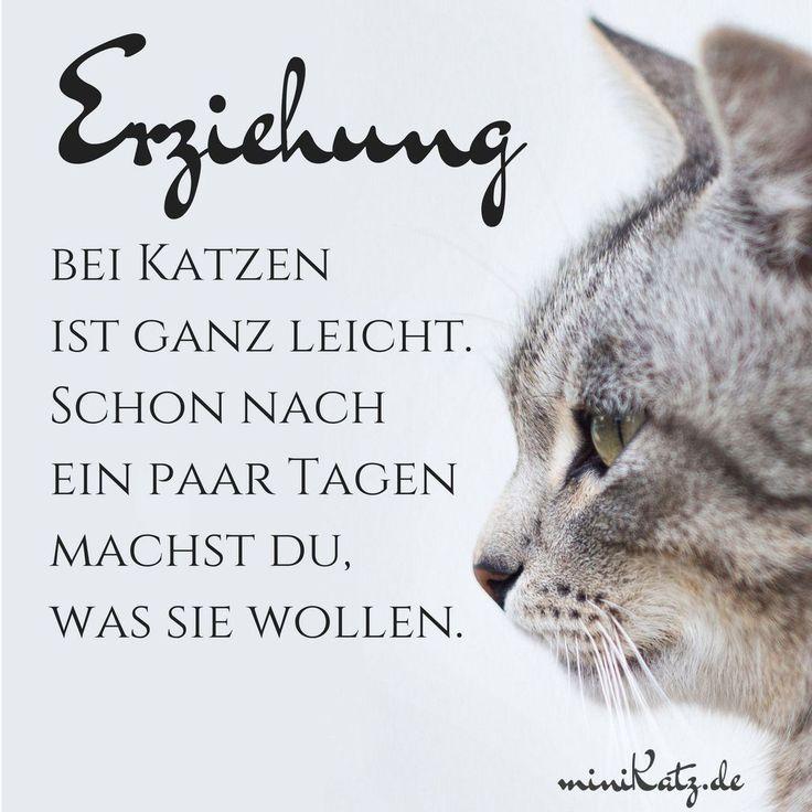 Zitate und Sprüche: Erziehung bei Katzen