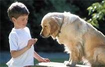 Cuidando Tu Perro: Vitaminas Para Perros Garantiza la Salud Para su A...