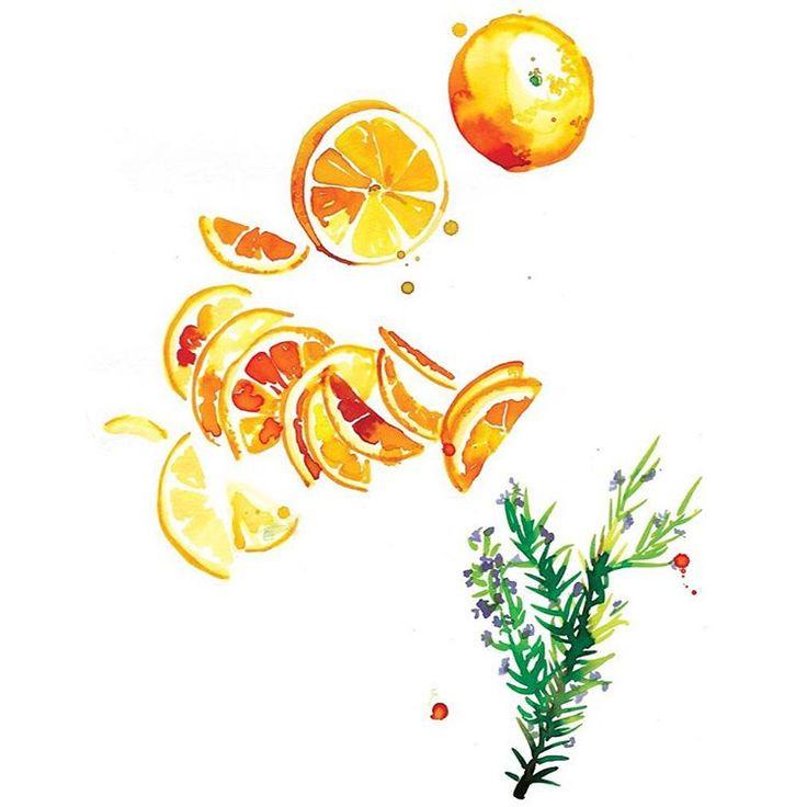"113 Likes, 3 Comments - Santiago Sunbird Illustration (@santiagosunbird) on Instagram: ""We were inspired for Octobers calendar illustration by @gourmetgirlfriend's orange and rosemary…"""
