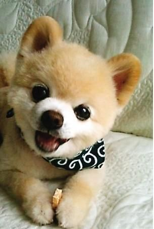 .Kind of remembers me of the Snuggles laundry detergent bear, but in puppy form :)