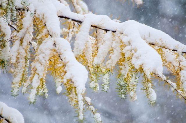 Желтый – цвета золота, этот цвет противоречив — он одновременно передает и блеск света и холод льда и снега, нейтрализует настро