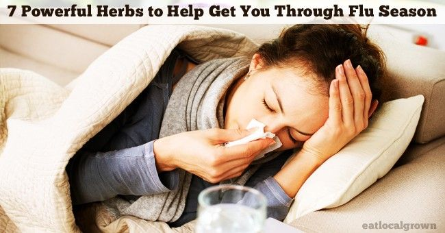 As we enter the colder season of the year, chances are many of us will get a cold or the flu. Luckily there are many inexpensiveherbsthat can help prevent or soothe the symptoms.