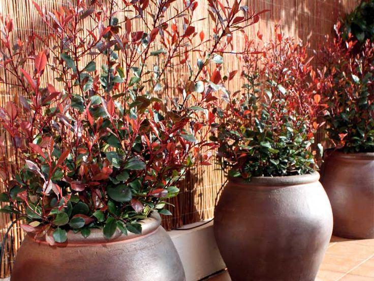 diseño de jardin en vivienda by lahabitacionverde.es