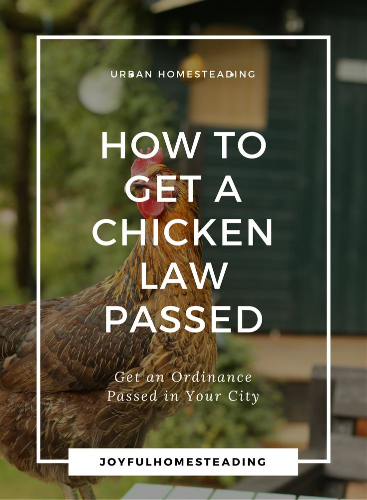 Urban chickens are the dream of every urban homesteader, but they're not always legal.  Fortunately self-reliant chicken aficionados around the country have been fighting town hall for their right