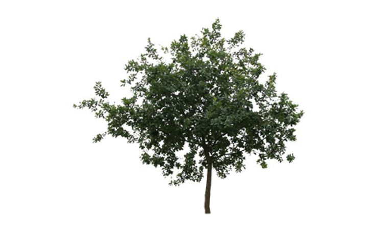 Small shapely cut out tree | Free Cut Out people, trees and leaves