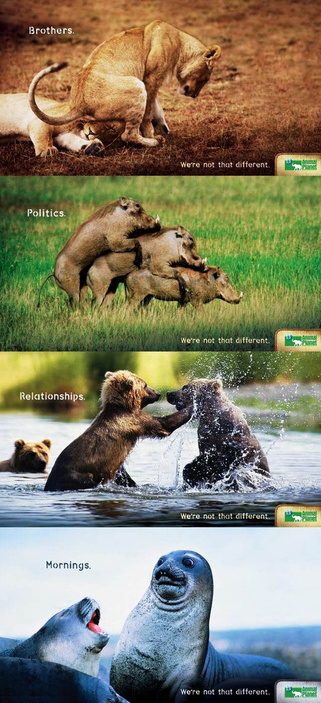 : Animal Planets, Funnies Ads, Funnies Pictures, Animal Funnies, Funnies Animal Pictures, Commercial Ads, Funnies Commercial, We R, Animalplanet