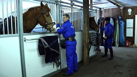 Turun ratsupoliisiyksikkö on saanut palvelukseensa uuden hevosen. Viisivuotias Ivan-ratsu on ollut kuukauden koekäytössä ja nyt se on päätetty ostaa vakituiseksi poliisihevoseksi.