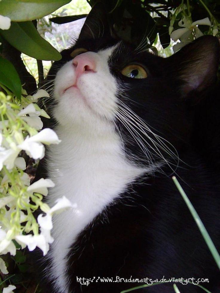 Sweet Cat by Bradamantea on #deviantart photography