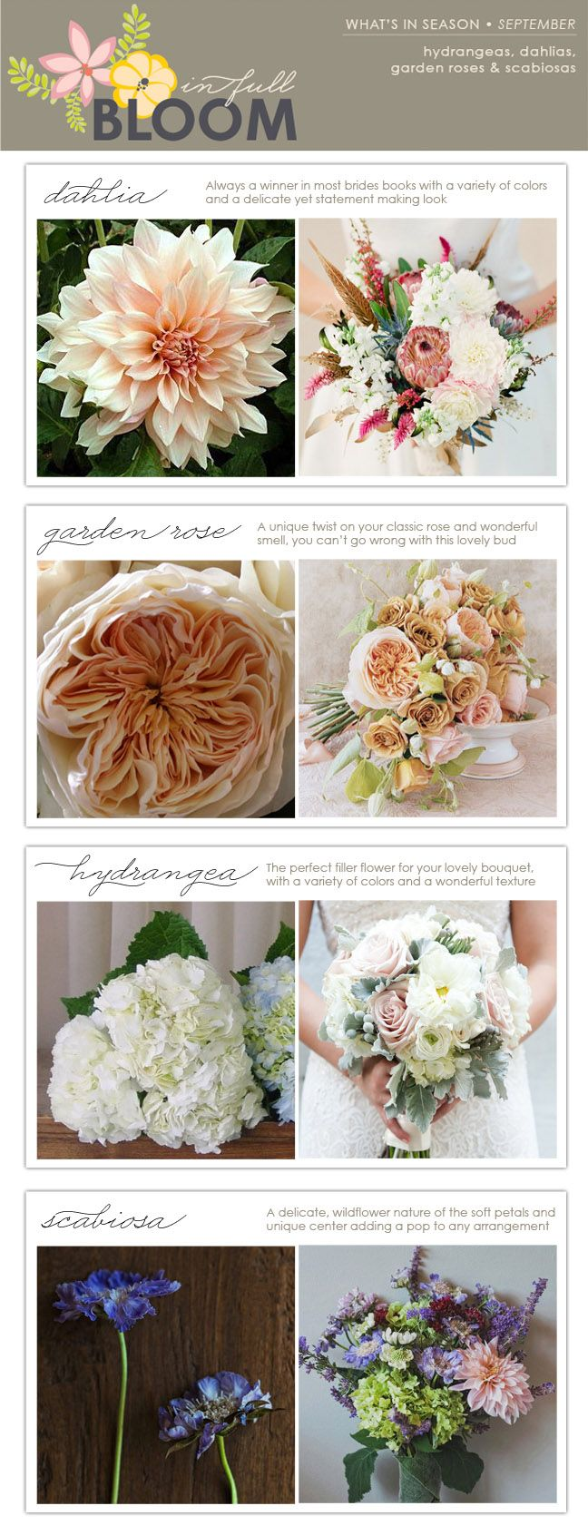 I have a new found affinity for Dahlias and Garden Roses! In Full Bloom: What's in Season - September - The Collection Event Studio - The Collection - A Wine Country Wedding & Event Studio Showcasing a Curated Collection of Vendors & Venues
