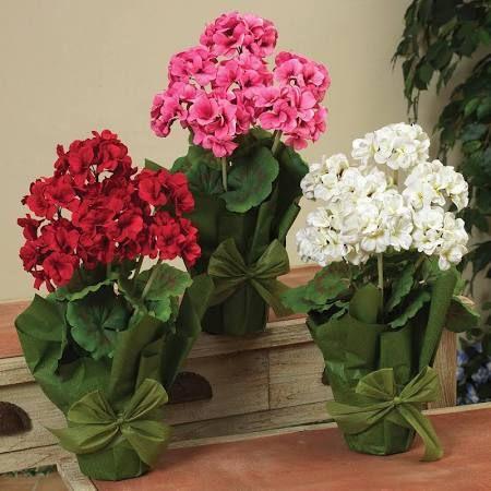 159 best flowering houseplants images on pinterest indoor gardening plants and flowers garden