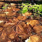 Autumn Leaves in Winter by Stuart Daddow Photography