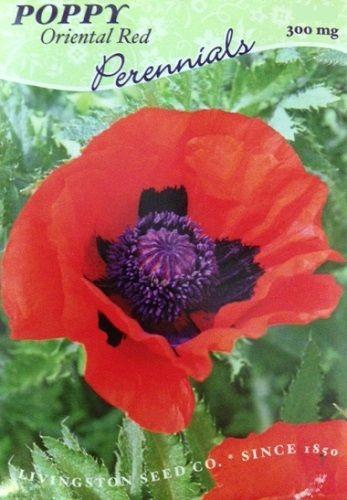 "1000 POPPY /"" THE GIANT /"" Papaver Giganteum Pink /& Purple Huge Pods Flower Seeds"