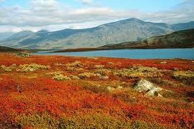 Lapin ruska. Ruska (a period of autumn colours) in Lapland, Northern Finland.