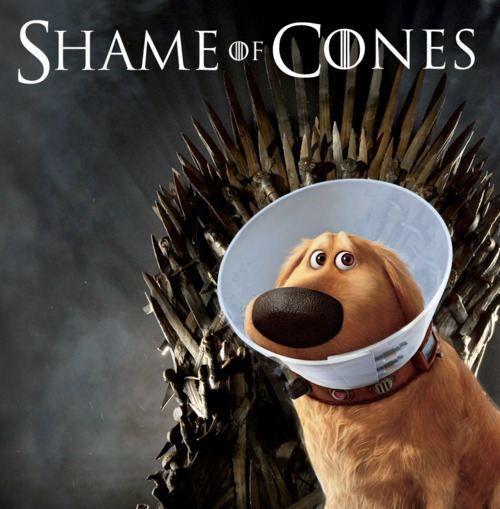 I do not like the cone of shame! - Dug