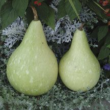 Bird House Martinhouse Gourds | Gourds | Vegetable Seeds | Jung Garden and Flower Seed Company