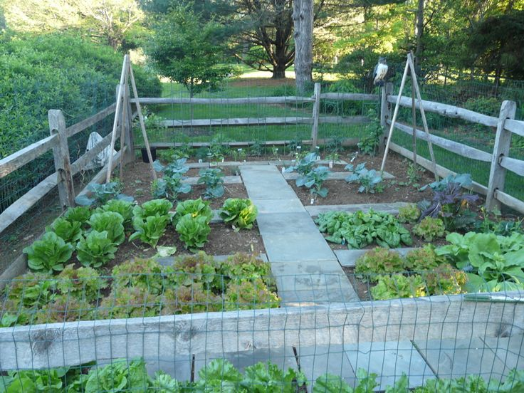 17 best images about home and garden on pinterest gardens creative and pallet wood - Vegetable garden ideas uk ...