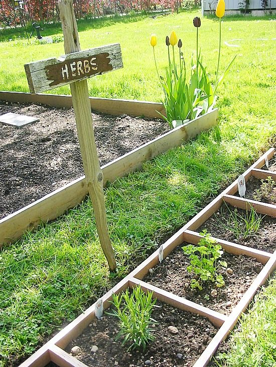 herbs planted in a ladder placed on the ground