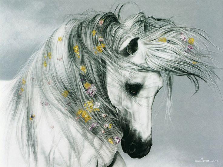 Horse of Elegant - Lesley Harrison Horse PaintingsLesley Harrison, Beautiful Hors, Hors Pictures, Hors Art, White Horses, Equine Art, Oil Painting, Hors Painting, Animal