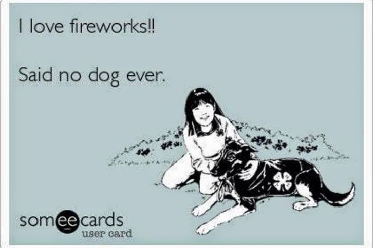 Tips for Keeping your Dog Safe on the 4th of July