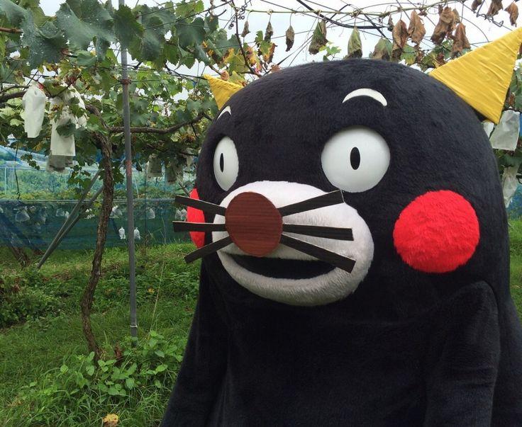 くまモン kumamon omg. Omg. He's a kitty!!!!!