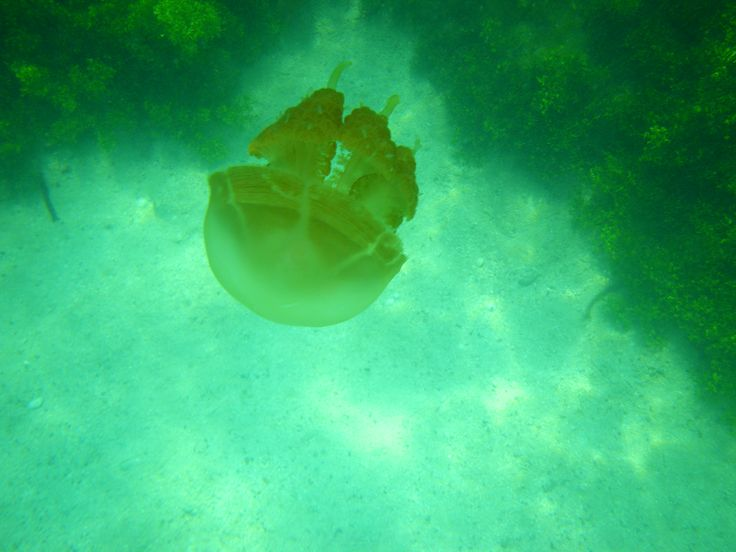 Jellyfish Lake - Kakaban Island - Derawan Archipelago (Indonesia) by Pascual Ibañez