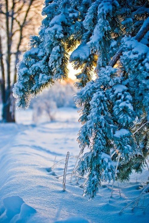829 best JoyfulMagical CHRISTMAS  Winter Wonderland images on