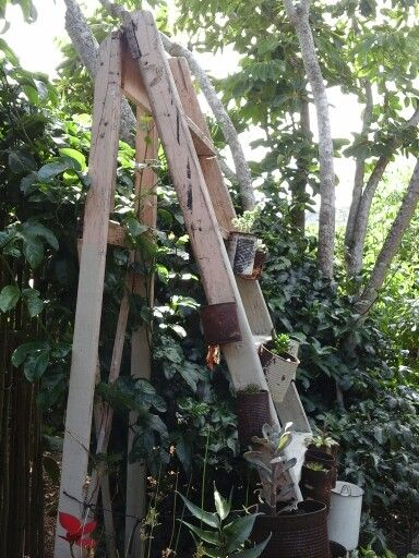 Old ladder as planter