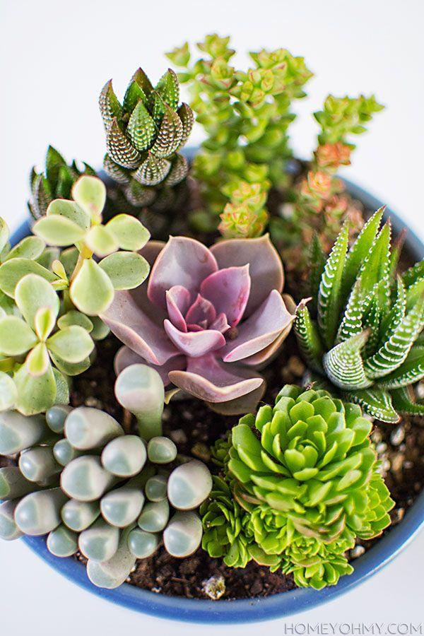 Mini jardín de plantas carnosas | Mini Succulent Garden