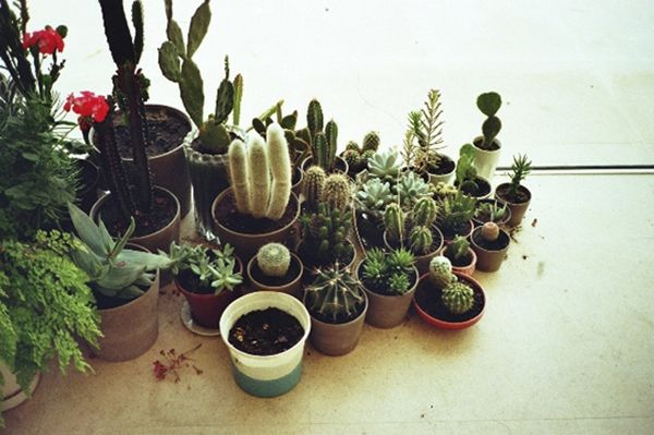 i think i'll add all of these to my aloe and cactus garden i seem to be developing. i have four big ones already lol: House Plants, Interior, Green Thumb, Delicious, Flowers, Cacti Collection