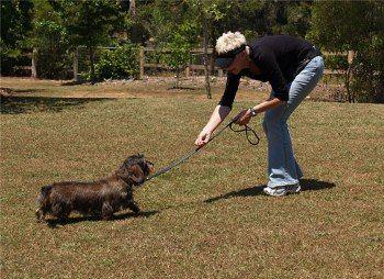 Como Pasear a un Perro – Adiestramiento http://www.mascotadomestica.com/adriestramiento-perros/perros-de-paseo/como-pasear-a-un-perro-adiestramiento.html
