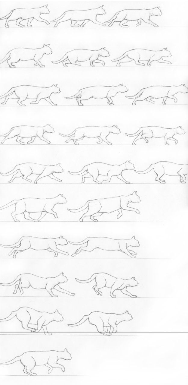 Model sheet pencil sketch outlines of how to draw a cat in motion/stride.