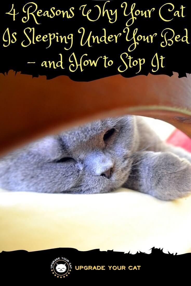 Why Does My Cat Sleep Under The Bed Cat Sleeping Cat Behavior Cat Love