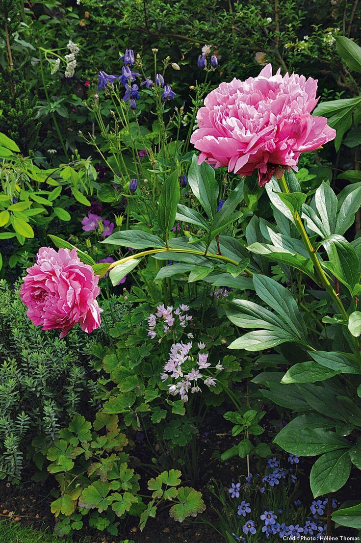 Les 25 Meilleures Id Es De La Cat Gorie Fleurs D 39 Allium