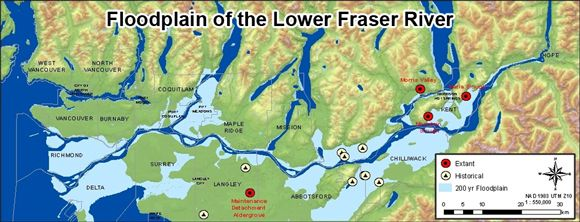Figure 6 shows the extant and historical populations in relation to the floodplain area of the lower Fraser River.
