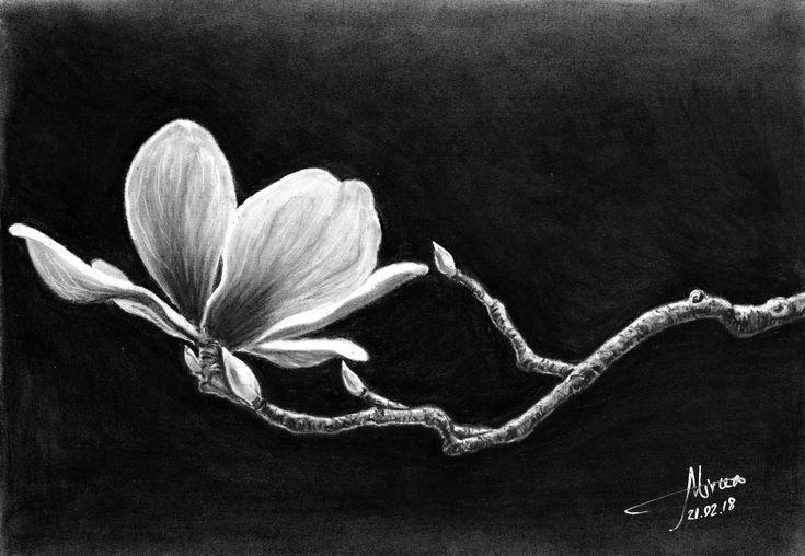 """""""Magnolia"""" charcoal 30x20 by Mircea Craciunel."""