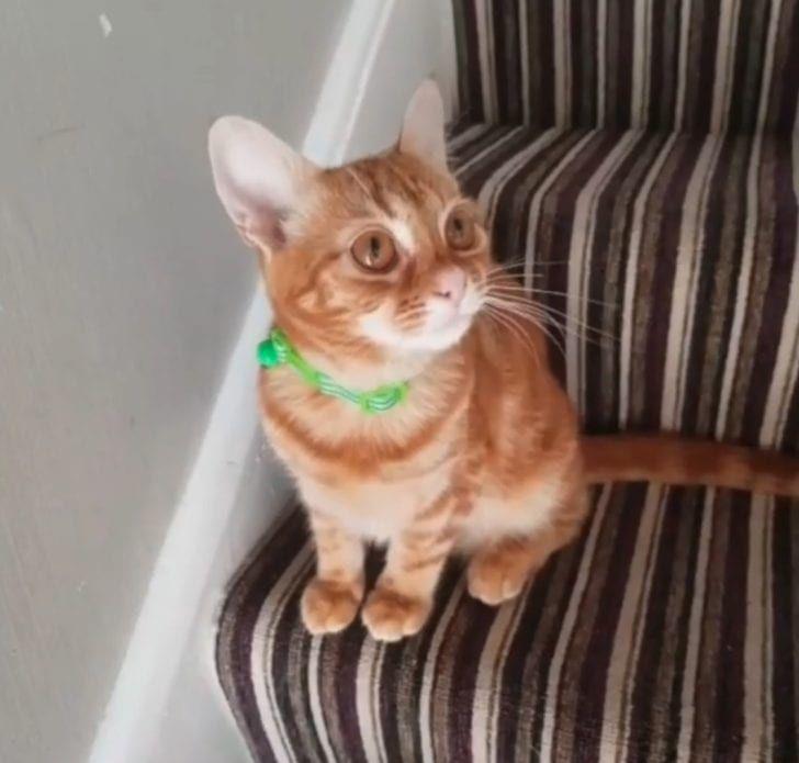 Ramai Yang Tidak Menjangka Anak Kucing Kecil Ini Akan Hidup Setelah Cedera Teruk Diserang Anjing Animals Cats