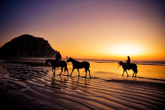 Morro Bay : Horses on the beach: At The Beaches, Bucketlist, Buckets Lists, Bays Hors, Dreams, California, Sunsets, Morro Bays, Silhouette Photography