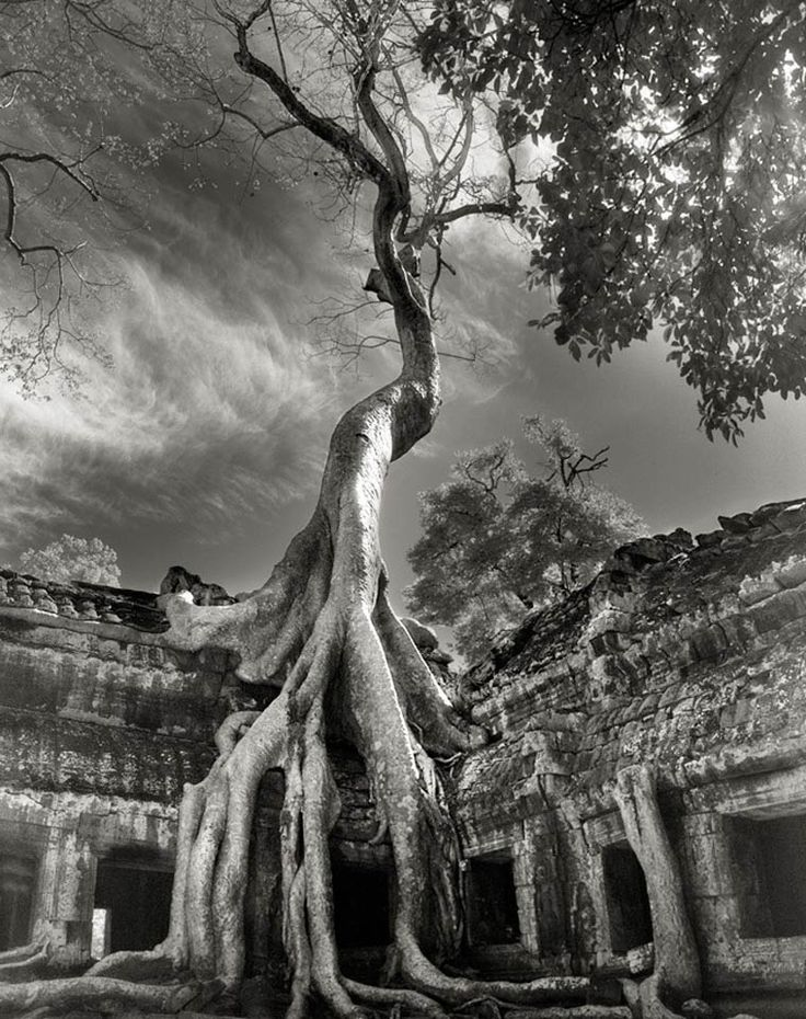 beth-moon-ancient-trees-11