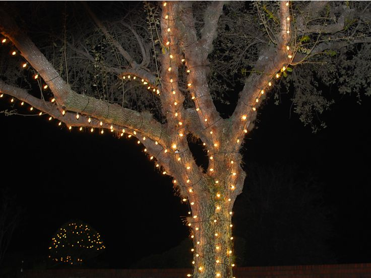 miller lights decorating trees both inside and outside we love coming up with ideas for - Christmas Swag Lights