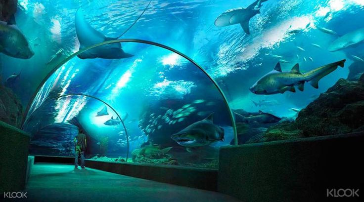 Save 45% on SEA LIFE Bangkok Ocean World tickets with optional Madame Tussauds entry from just THB520 with a convenient mobile admission ticket