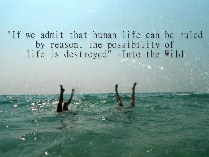 Into The Wild Book Quotes Delectable 50 Best Into The Wild Images On Pinterest  Into The Wild
