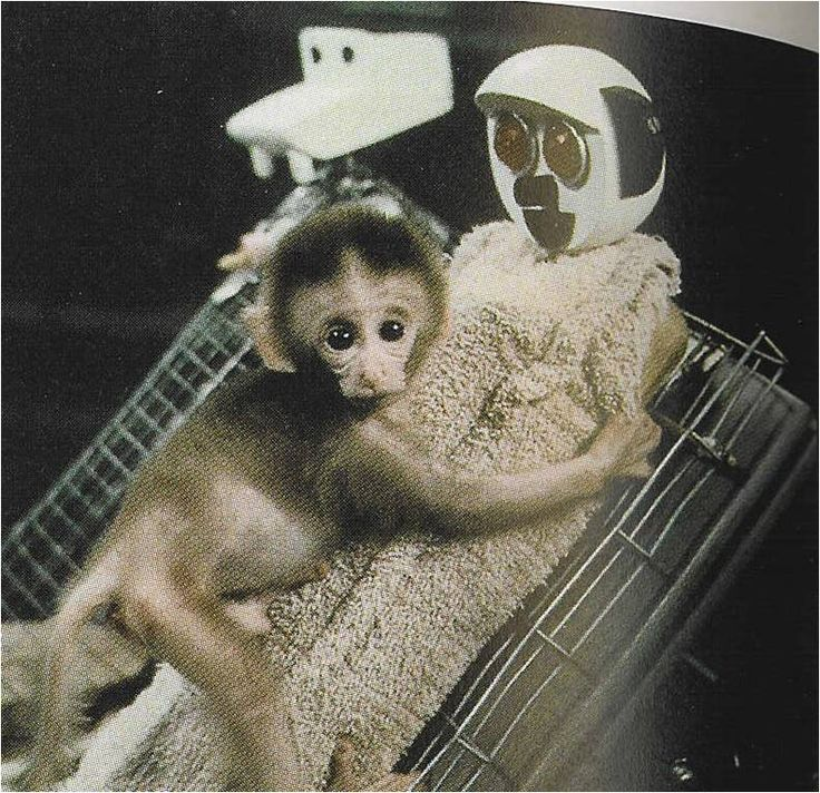 harlow animal behaviour psychology Imprinting and human attachment behaviours print was one of the first to study this aspect of animal behaviour harlow separated infant monkeys from.