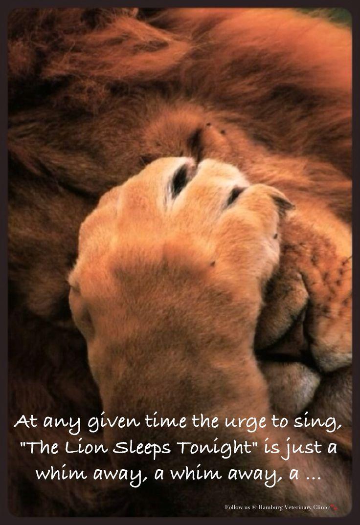 Good night funny | Sweet dreams | Animal humor | Cute lion