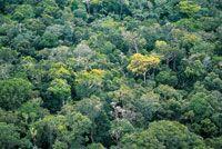El dosel de la selva amazónica conforma un mosaico, bajo el cual habita la mayor diversidad de especies de fauna y flora del planeta.