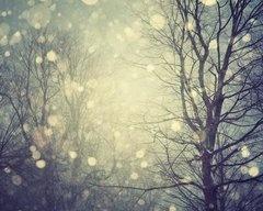 winter: Winter Snow, Snow Photography, Irene Suchocki, Winter Wonderland, Natural Decor, Landscape Photography, Trees, Winter Tales