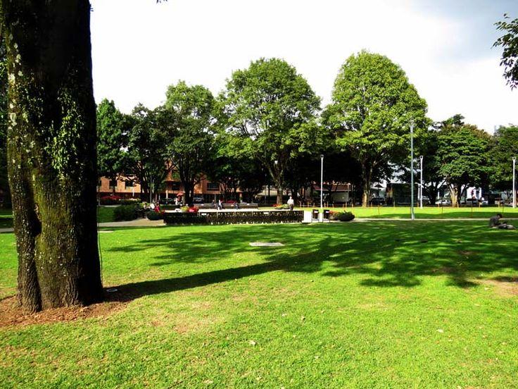 15. En los días soleados los árboles proveen sombra.