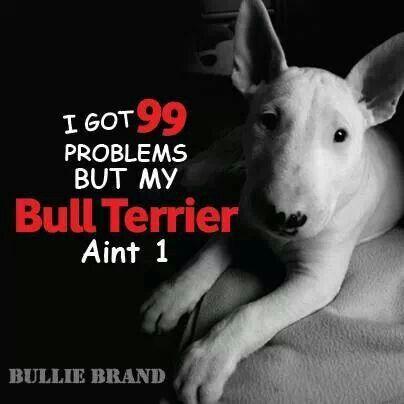 I Got 99 Problems But My Bullie Ain't 1...